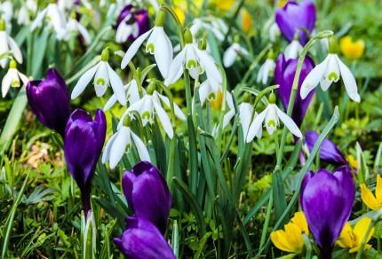 Mit vielen tollen musikalischen Höhepunkten steht der musikalische Frühling für den Königshovener Quartettverein vor der Tür.