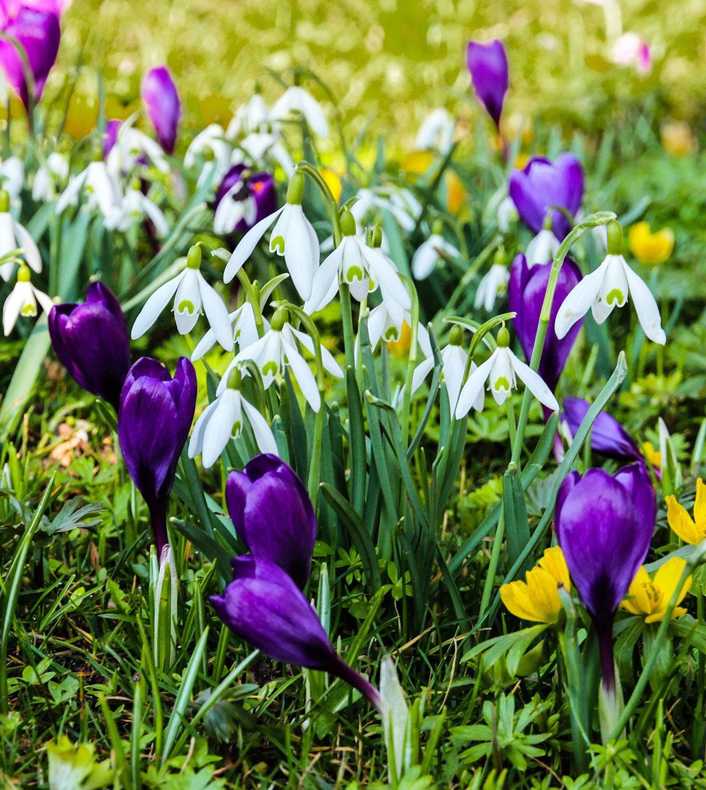 Mit vielen tollen klangvollen Terminen steht beim MGV Quartettverein Königshoven der Frühling vor der Tür.