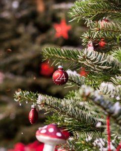 Üben Sie mit uns gemeinsam für den heimischen Weihnachtsbaum!