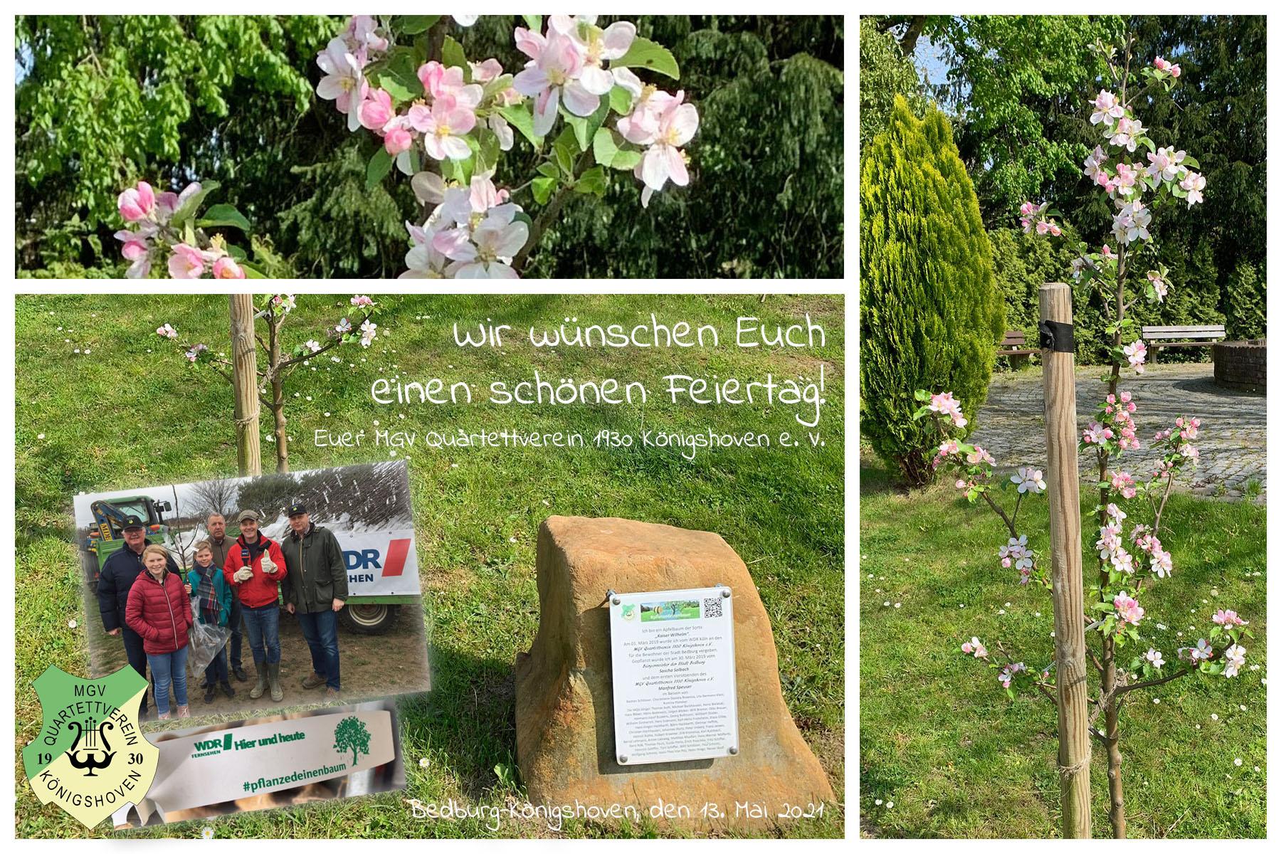 Mit der Blütenpracht unseres WDR-Apfelbaums wünschen wir Ihnen / Euch einen schönen Feiertag und erinnern uns immer wieder gerne an die WDR hier und heute Aktion #pflanzedeinenbaum im Jahr 2019 zurück. (Fotos: Manfred Speuser)